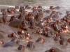 驚!非洲第一殺人王「秒殺鱷魚」畫面短短1分鐘讓路人全看傻眼了....
