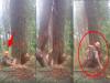 驚!伐木工人「亂鋸樹」當場慘遭報應!這一擊充滿「樹的憤怒」讓網友全看傻眼了...