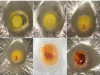 用保鮮膜孵出的烏龜蛋,孵化後竟然長成這樣....