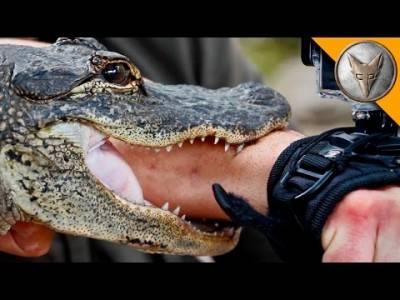 男子不相信「烏龜鱷魚」能夠輕易咬碎手臂,竟把手塞進牠的嘴裡!結果下一秒眾人都看傻了!他的手竟然...