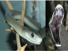 為了拍這致命的毒蛇,攝影師意外被咬,卻奇蹟似的活了下來!