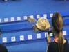 龜兔賽跑的寓言成真!泰國日前進行「龜兔賽跑」的比賽,結果完全出乎意料之外!