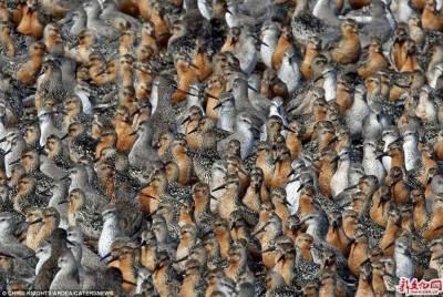 用動物密集程度檢視你的「密集恐懼症」