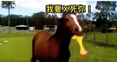 給馬一隻「尖叫雞」會發生什麼事情?網友搞笑實驗,結果馬兒一拿到尖叫雞就竟做出超驚人的舉動!