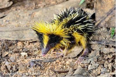 長的像雞雞的蛇 世界罕見物種,已經完全超出想像範圍了