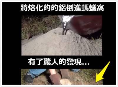 將熔化的的鋁倒進螞蟻窩,有了驚人的發現...