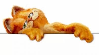 加菲貓是公是母??為了這個問題,千名網友吵起來!