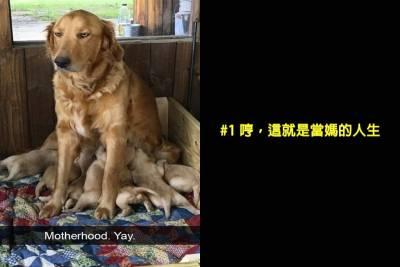 盤點15張「你的寵物比你更無奈的心裡OS照」超爆笑!看看你是不是混得比狗狗還差, 1 沒錯,這就是當媽的人生