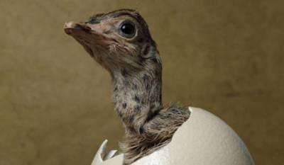 世界最大的茶葉蛋誕生了!煮了一晚上,就像鍋裡放了個足球。。