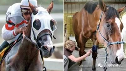 這大概是第一批達成抽象大師的馬,簡直馬生贏家啊!