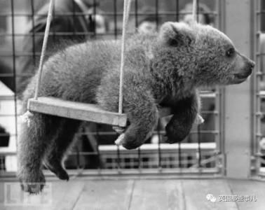 英國女王「家裡養的寵物可以直接開動物園」絕對不誇張!狂到連「鱷魚寶寶 棕熊」都可以養...