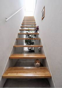 看完這些為寵物打造的家,突然就不想做人了