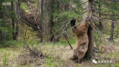 身高200公分就算了,還練的那麼壯... 這樣大樹一樣的男友,你覺得呢!
