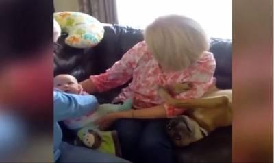 不愧是奶奶帶大的狗!不許奶奶抱孫子只能抱自己...