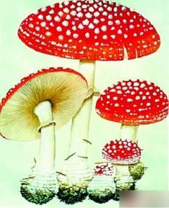 讓人好想咬一口的蘑菇...其實它..不單純