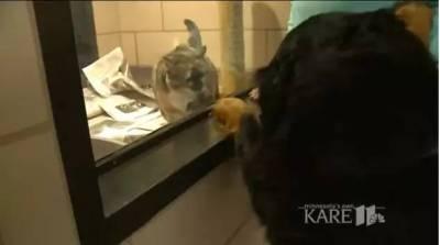 一個熱愛撿球的狗狗,就這麼把撿球發展成了一項無比有愛的事業啊
