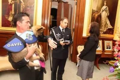 對人太友好,這小警犬就這麼被警隊給炒了...最後小奶狗做出這樣的抗議反擊