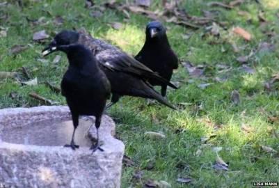 一個每天餵食烏鴉的小女孩,得到了來自烏鴉的報恩...然而最後這結局也是猜不到