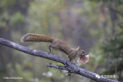 小松鼠居然會自己曬蘑菇干吃,胖胖企鵝也有大長腿,還有鯊魚幼胎會在母鯊子宮裡互相吞吃!