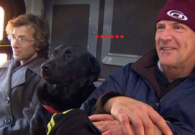 在西雅圖有隻很紅的狗狗,牠會自己搭公車到公園玩耍,讓牠養成這樣的習慣全都是因為一根菸...