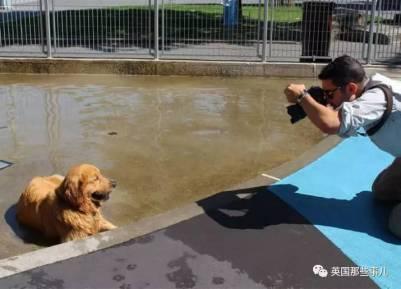 借別人的狗,賺自己的錢!小哥被炒魷魚後,反而意外發現一份無比爽的工作