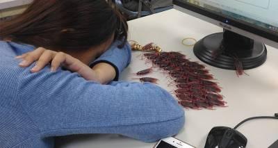 男生看女同學上課時一直睡覺,竟找來「48隻蟑螂兵團」打算惡整她,沒想到「結局」出乎意料