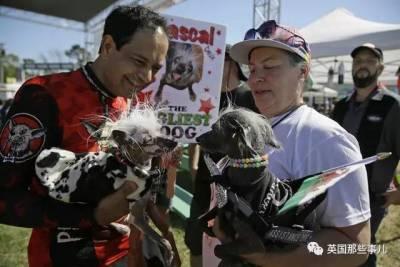 一年一度的醜狗大賽…個個醜到驚天地泣鬼神,不過今年的冠軍一定放水了