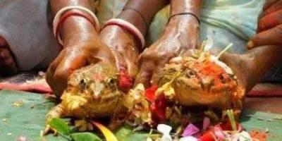 最詫異驚人的婚禮,伴侶竟全是非人類! 14 這個真的是令人傻眼