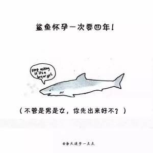 你知道鯊魚一次懷孕需要4年 長頸鹿只睡倆小時嗎