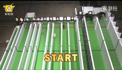 日本人搞了一場12生肖賽跑大賽,獲得冠軍的竟然是......