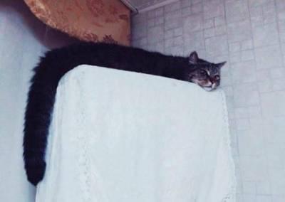 老師要學生畫貓咪,結果他畫這樣直接 0 分...結果網友看到「貓咪本人」全聲援:該給100!