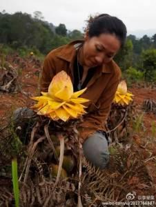 29歲拋下高薪工作,允許女兒不上學,在雨林生活18年,年近50的她震驚了聯合國!