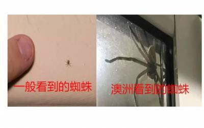 感受完澳洲的彪悍動物...其他地方的小蟑螂小蜘蛛還算個鳥啊...