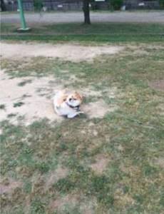 一隻固執無比,硬要逛公園的汪,和一個硬要拉它回家的鏟屎官....