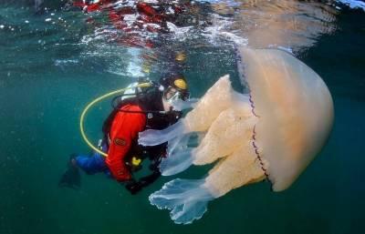 巨型水母出沒 35公斤好嚇人