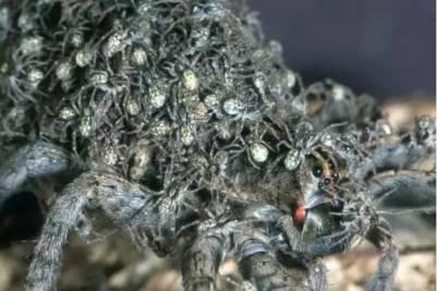 15張來自四面八方蜘蛛圖集,你能堅持看到第幾張, 14有密集恐懼症,千萬別看
