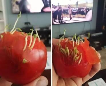 蔬果放久了,是會變態的…他們掏出一直沒吃的蔬果,被嚇了一跳...
