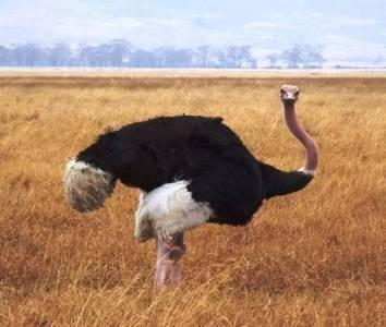 22種巨大的動物,嚇得我虎軀一震!