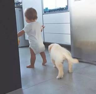 看到小主人要上幼兒園,金毛忍不住傷心起來,但小主人接下來的舉動暖化了!