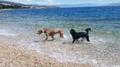 他們居然真的做了一個海灘...一個專門為汪星人醉生夢死的海灘...