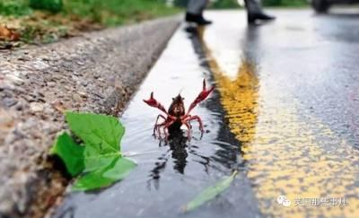 龍蝦究竟是算爬的還是游的?就爭這個,當年法國和巴西不惜出動航母,史稱龍蝦之戰..