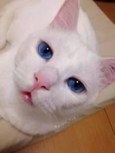這隻貓醒著是美麗天使,睡著醜到爆炸!不要睡啊,快醒醒!