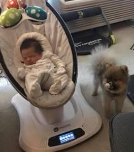 主人照顧寶寶忽略了狗,沒想到它竟然做出這樣的事「報復」!