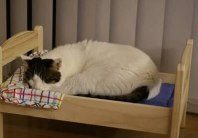 自從喵星人盯上IKEA一款床後,回床率猛增...然而這是一款對胖砸充滿惡意的床啊!