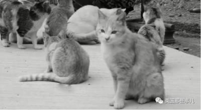 誰說老鼠見了貓就會嚇破膽,紐約的這兩隻吱星人,成為了喵星人的最萌鼠奶爸