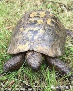 70歲老龜為愛奔襲10公里,卻在XXOO臨門一腳被強行扭送回家...一把辛酸淚啊!