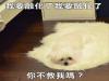 如果狗狗跟冰淇淋一樣會融化 看了會驚呼的超可愛狗狗