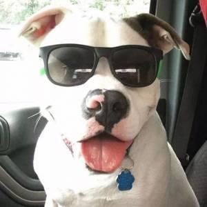 他們收養了一隻會微笑的狗,沒想到卻因此被告上法庭……
