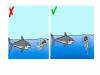 12個技能被野獸攻擊怎麼保命