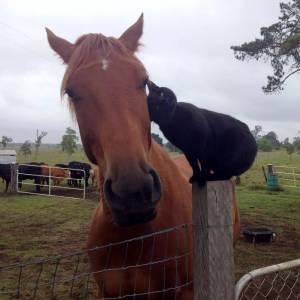 當一隻馬兒和一隻喵對上眼後,這個農場主人每天看到的畫風,就有點特別了...